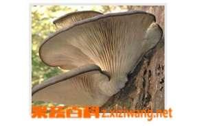 凤尾菇的图片做法和功效